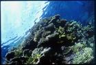 石垣島:さんご礁