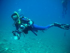 bule-fish の海の世界